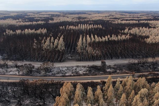 Trees in vertical lines burnt either black or white with a highway going through
