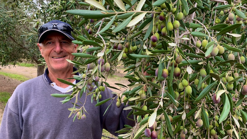 A man is standing next to an olive tree smiling