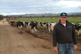 Graham Manning with his prized dairy cows in Harvey