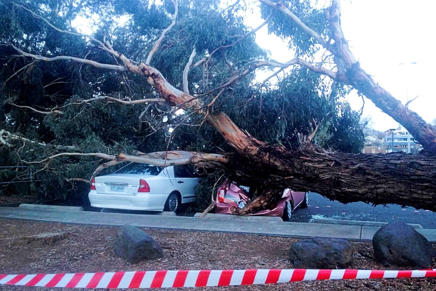 Two cars crushed by a large gum tree overturned by strong winds