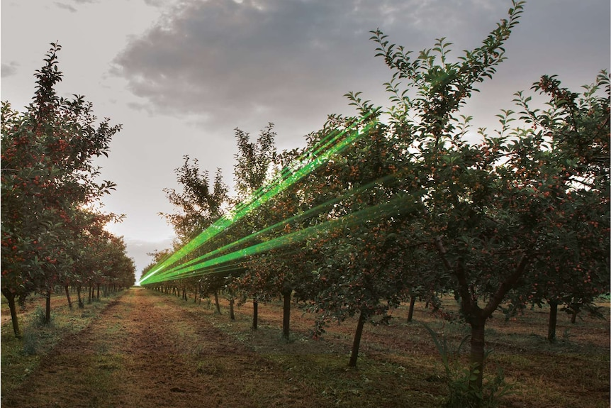 The Bird Beam laser system in action at an orchard