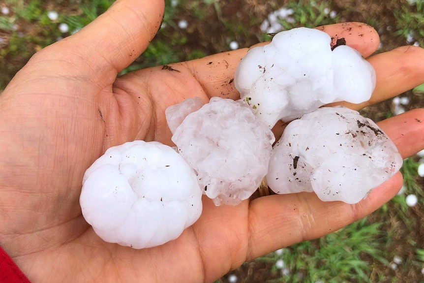 Golf ball sized pieces of hail in a person's hand.