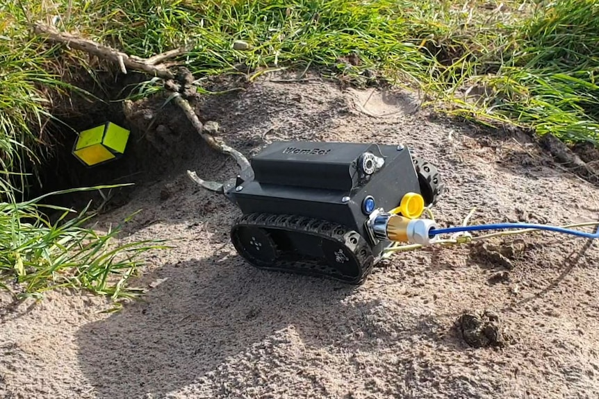 The WomBot about to enter a wombat burrow.