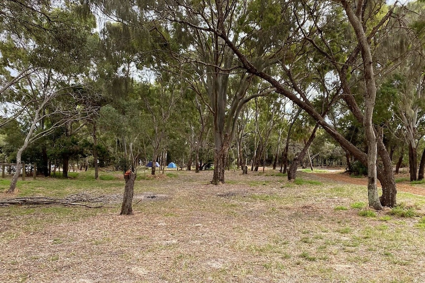 Grassy area with trees and small camping tents