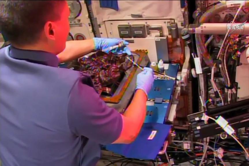 Astronaut harvests space lettuce