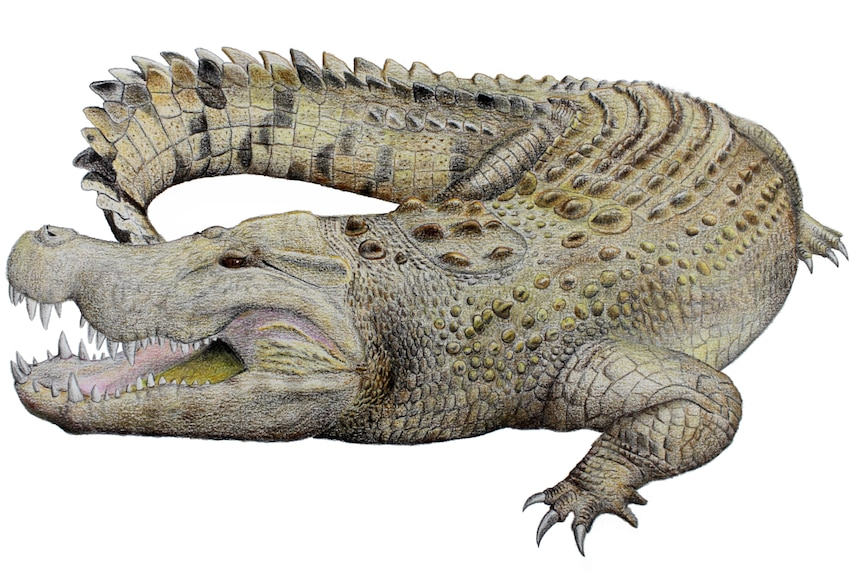 a detailed drawing of a crocodile different shades of green, grey and dark brown