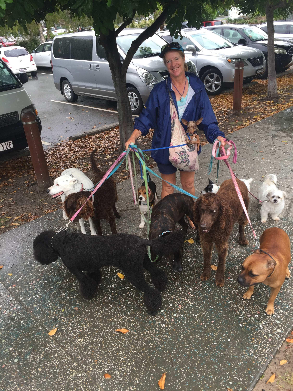 Trainer Nikki Logan walks 10 dogs on leads along Palm Beach.