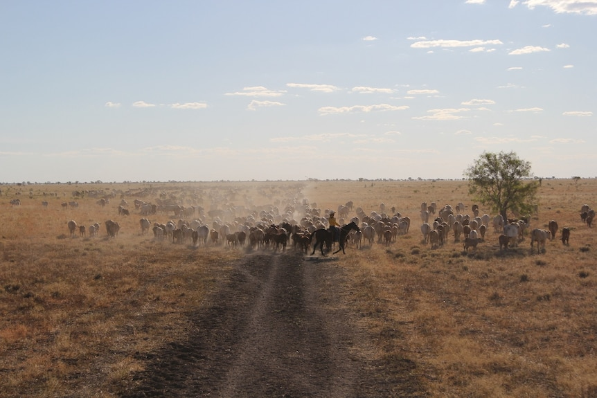 Mr Mitchell says the Rangeland Lease will help Australia to capitalise on Asia's growing demand for food