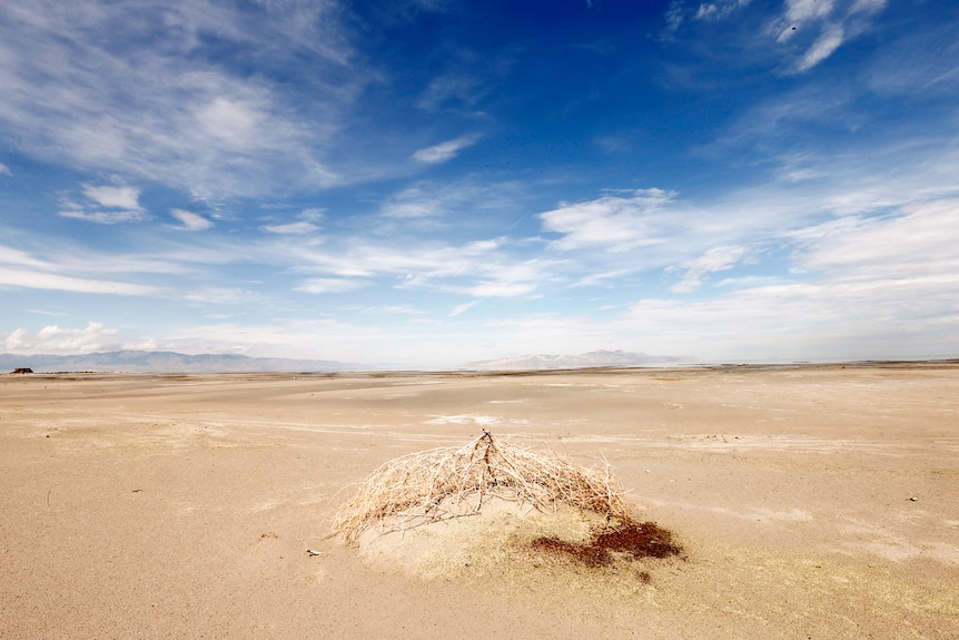 A tumble weed sits on a mud flat covered in plain dirt and sand.