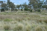 Search for best ways to retain biodiversity