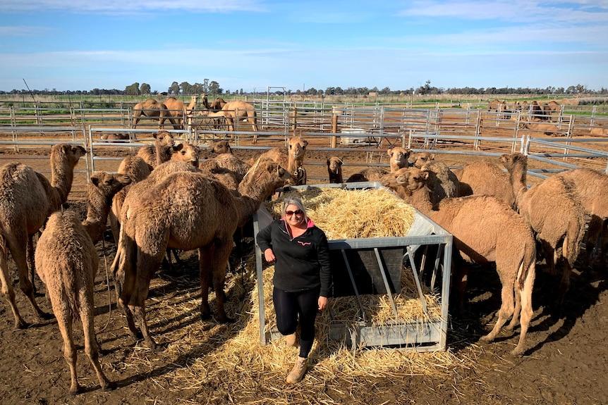 A woman is standing amongst a dozen camels on a farm