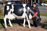 A lady wrapping her arms around the next of a fake dairy cow