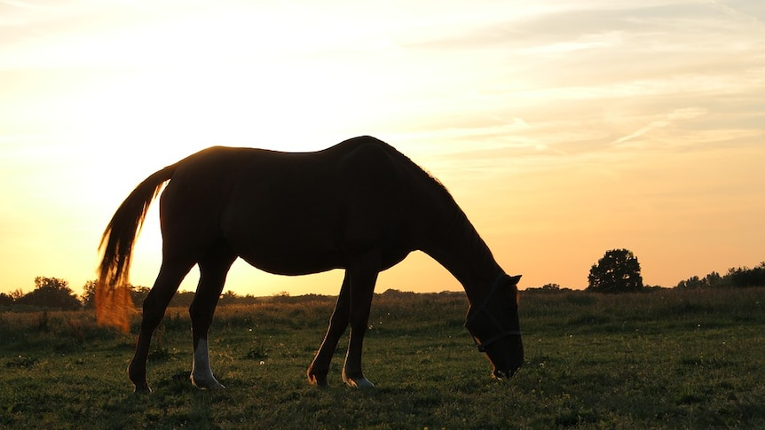 Silhouette of a horse.