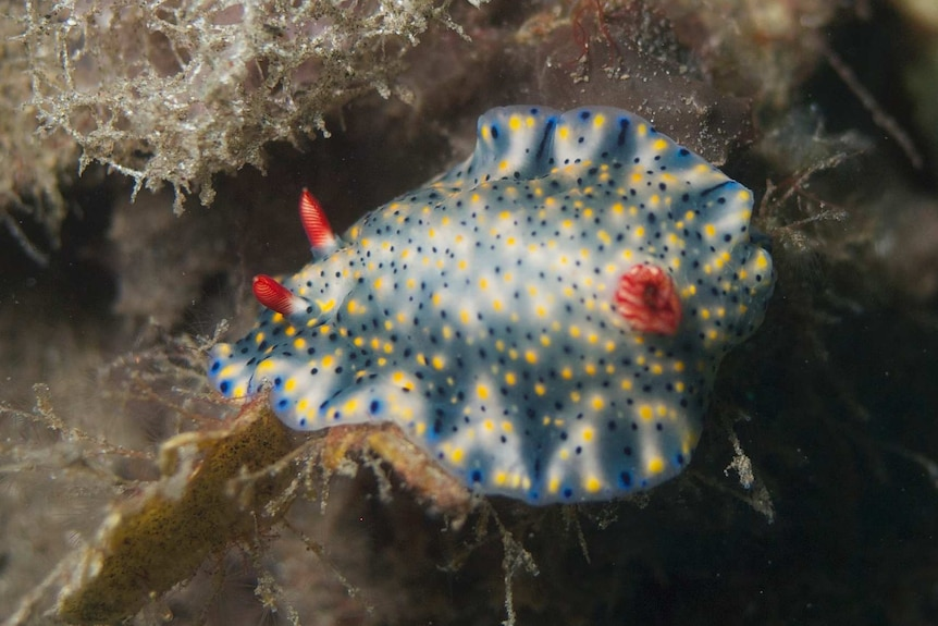 A nudibranch in all its splendour