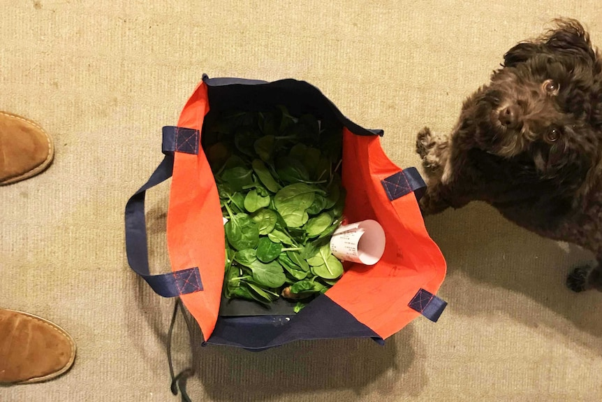 Spinach leaves in reusable bag representing our reporter's attempt to go one week without plastic.