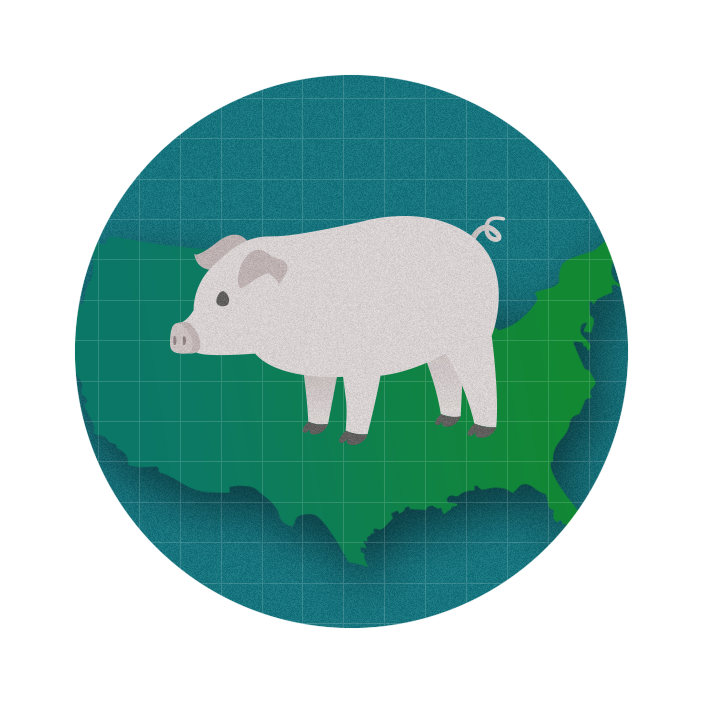 graphic with a pblue circle in the middle of which sits a pig
