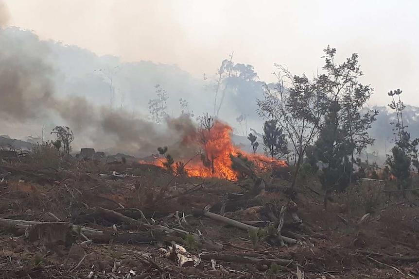 Bushfire and smoke