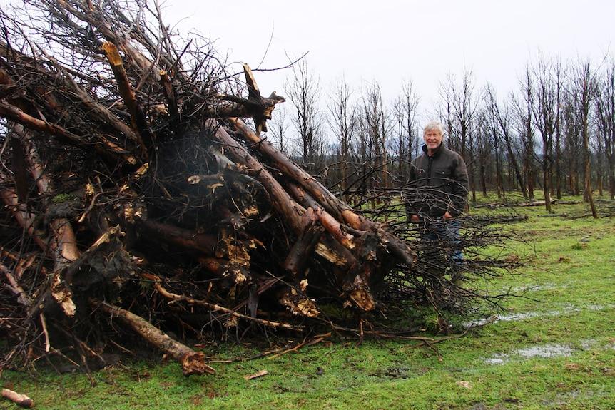 Failed forestry plantation, 'Icena' north east Tas