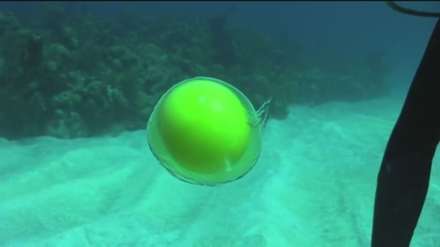 Egg under water experiment