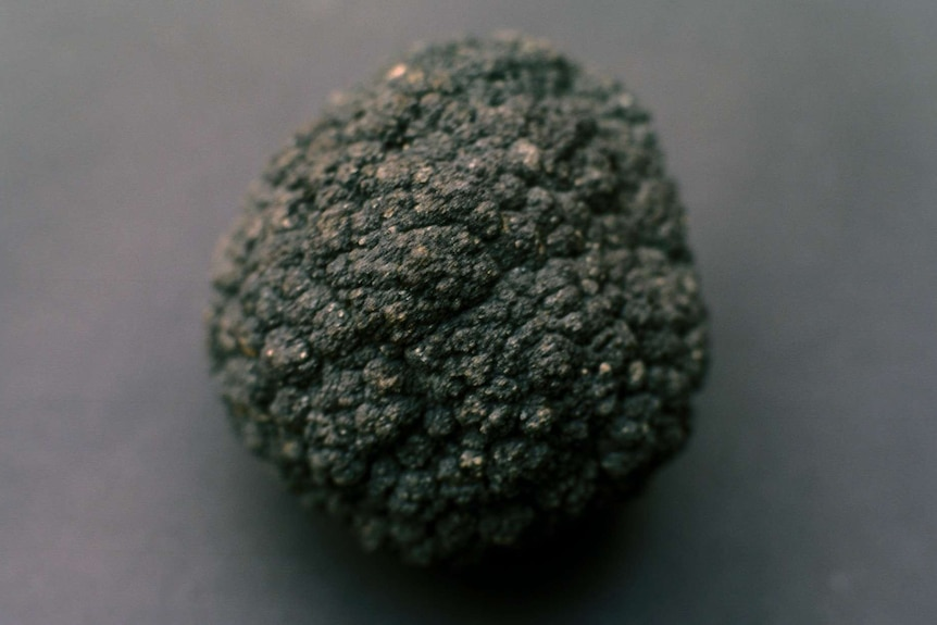 An image of a rock that looks like a potato placed against a grey background.