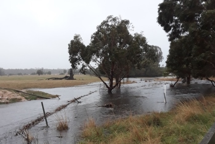Floodwaters near trees