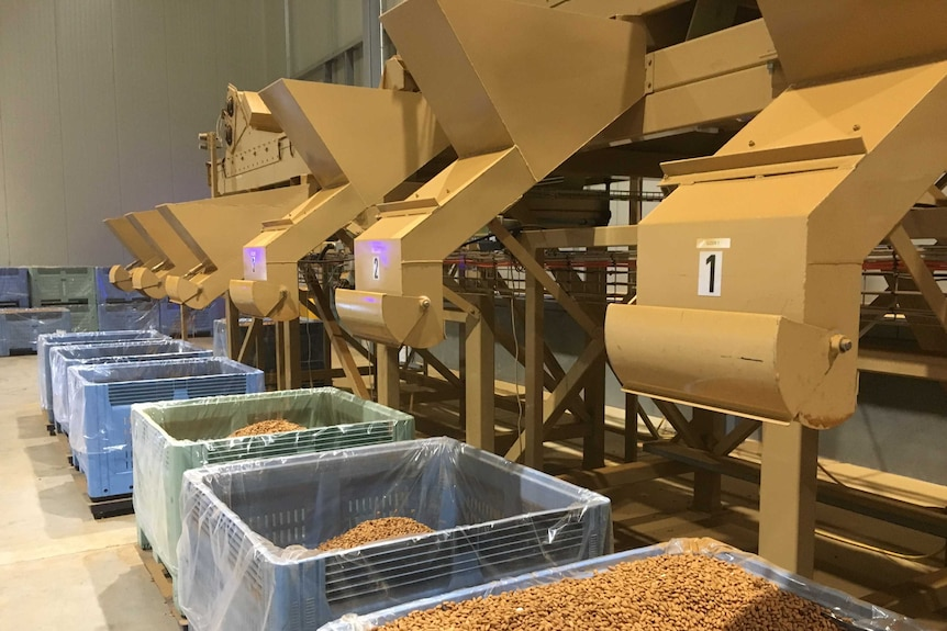 AlmondCo processing plant near Griffith