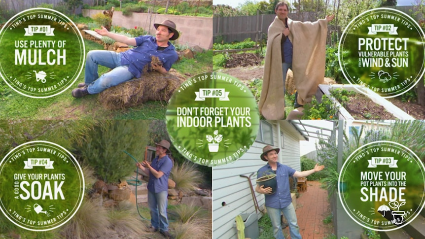 Series of images of man in garden with graphic tips on caring for plants