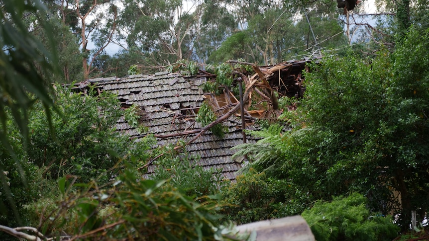 Fallen trees have landed, damaging a roof.