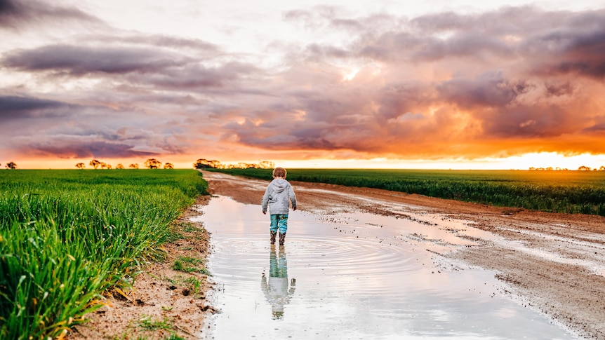 A young boy stand in puddle on farm at sunset