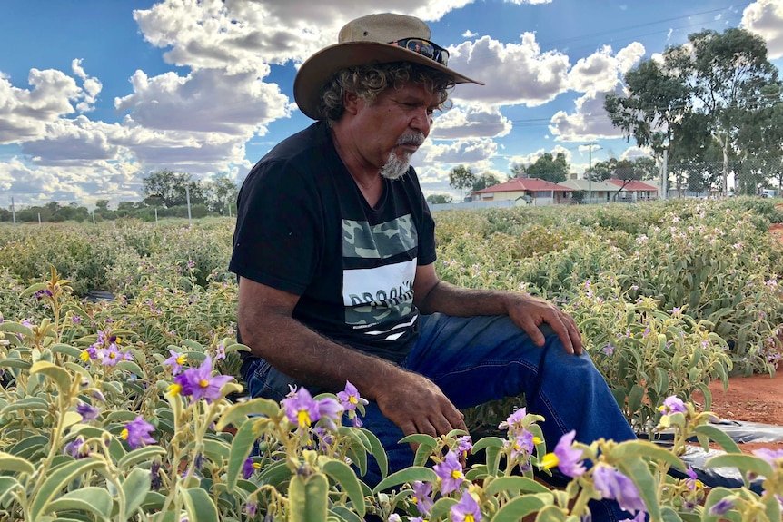 Man sitting and looking at his crop