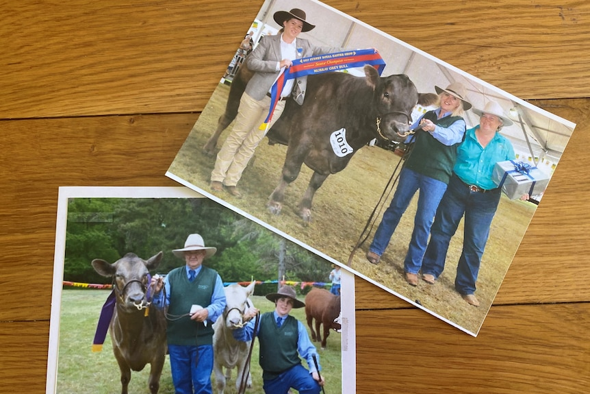 Photos of people standing next to prize winning cows, with show ribbons