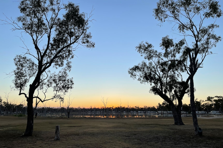 Dawn breaks over Lara with golden and blue sky over wetlands in the background, silhouettes of two gumtrees in foregrou
