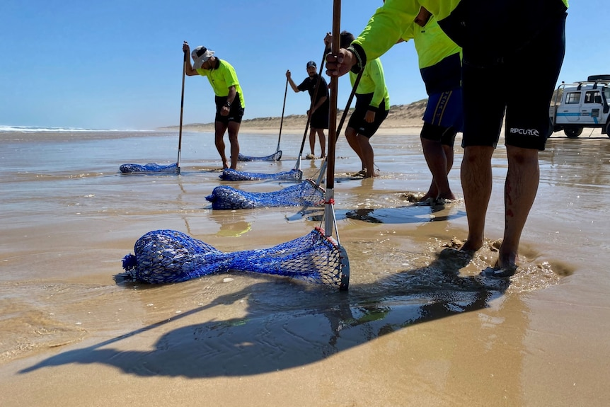 Men with hi-vis outfits on use nets to pull shells from a beach