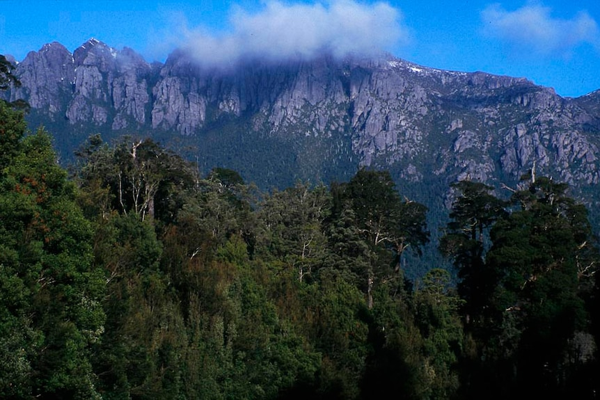 mountain peak rising above temperate rainforest, capped with light cloud