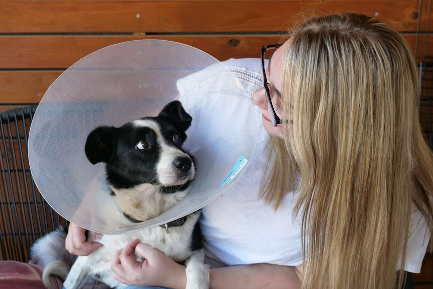 A black and white dog in a head cone looks at his owner Ms Diggens who has blonde hair and glasses.