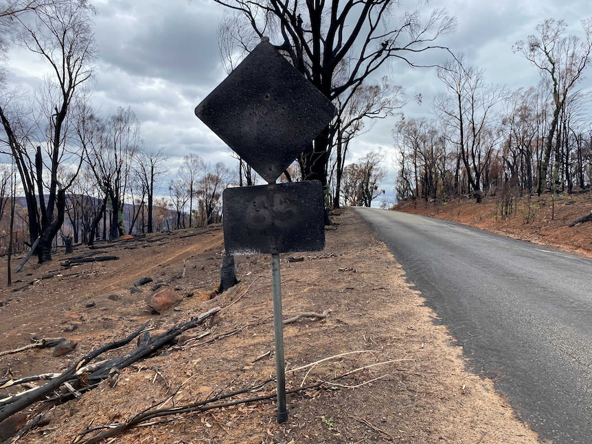 A burnt roadside speed sign surrounded by burnt trees.