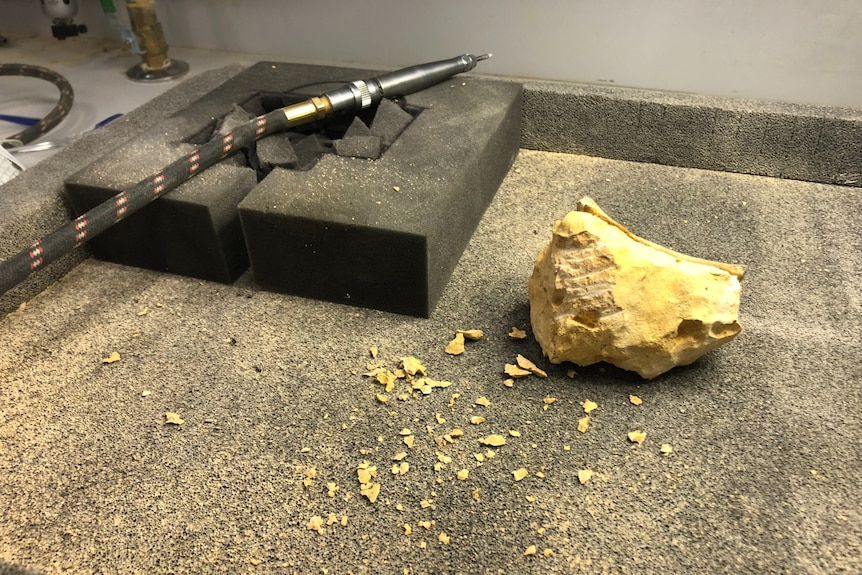A small power tool resting next to a piece of pale rock.