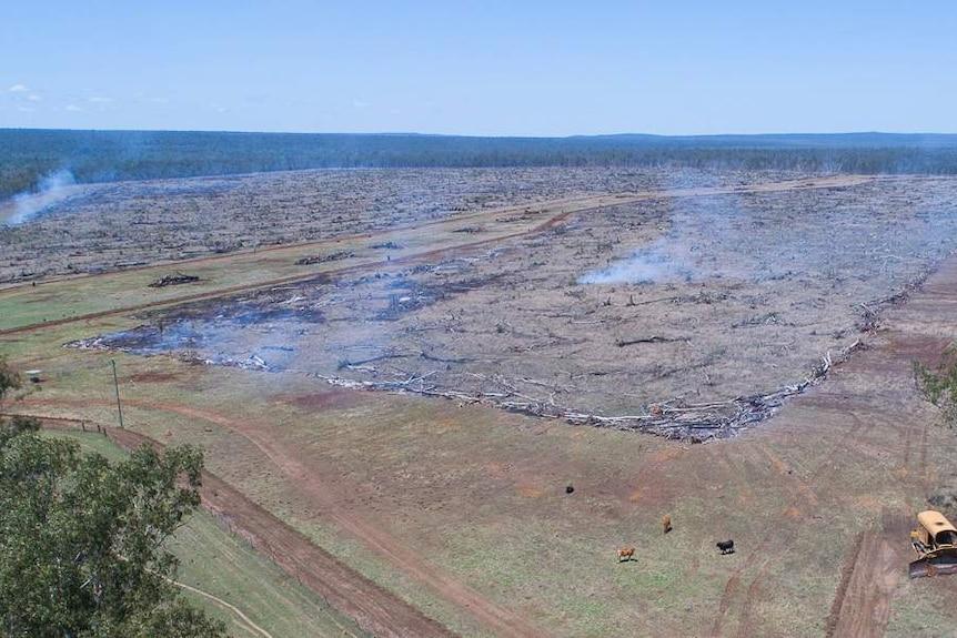 Smoke rises from cleared land