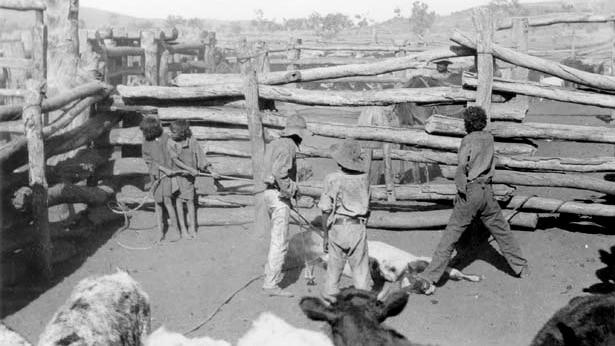 Aboriginal children branding a calf