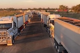 Dozens of trucks full of grain line up under a hazy sky.