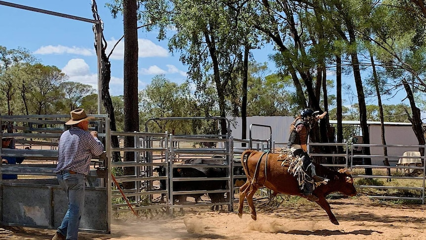 School of the Air student and bull rider Riley O'Dell practising riding a mini bull
