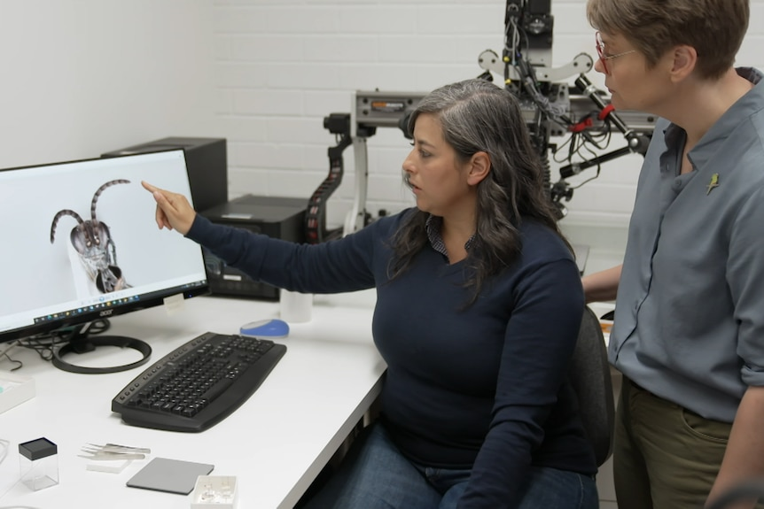 Dr Rodriguez points to insect on computer screen