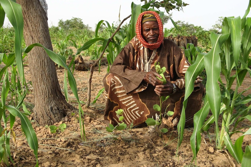A local farmer proudly shows his regenerated trees in Maradi state, Niger Republic.