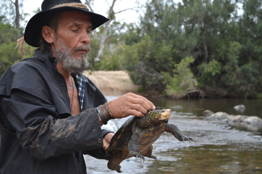 Indigenous man in a black hat holding and looking at a green turtle with a cream white bill standing in a creek