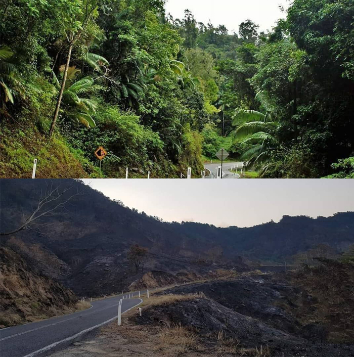 A before and after shot of Eungella, which has been ravaged by bushfires.