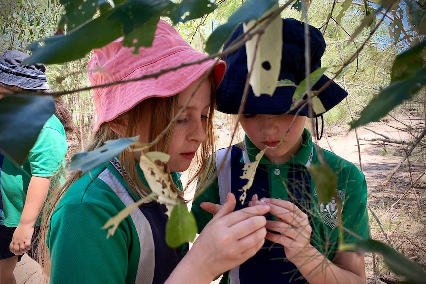 Two primary school students at Berrinba East State School look at leaves on a tree in new outdoor lessons.