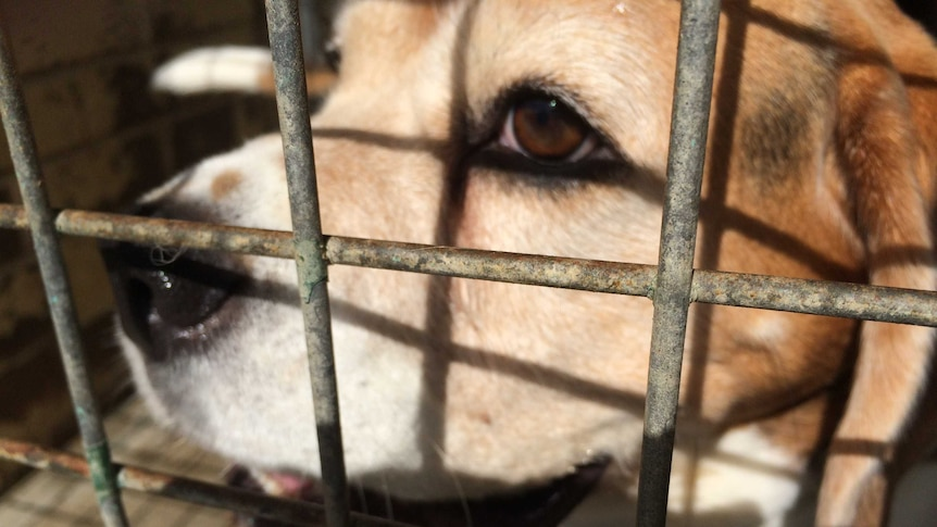 The ACT Government's Domestic Animal Services only take care of stray dogs.