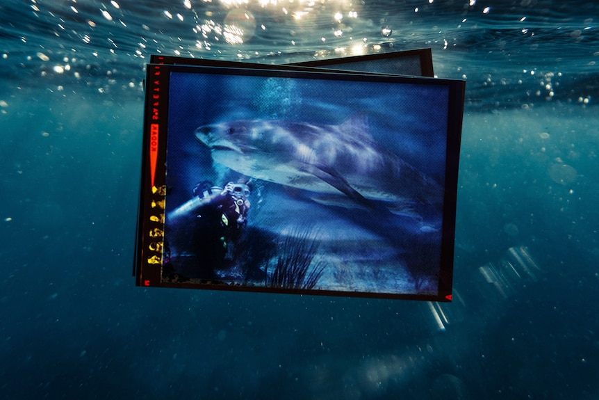 On top photo under the water one of a small stack of photos shows person taking photo while scuba diving with shark,