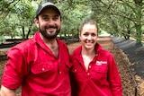 James and Aimee Thomas grow macadamias at Falkirk farm at Lower Wonga