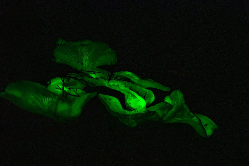 Bright green mushrooms surrounded by darkness.